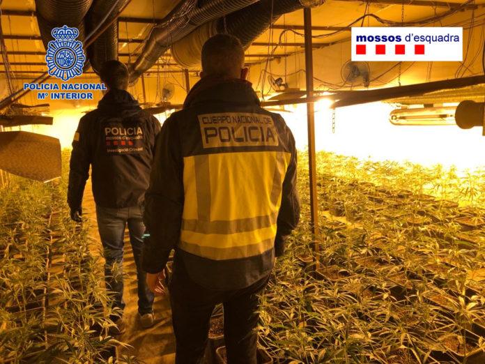 Agentes en la plantación de marihuana